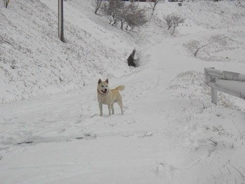 雪ではしゃぐ福助